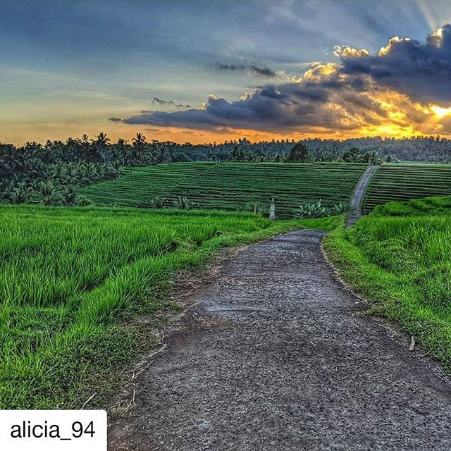 @alicia_94  exploring the beautiful rice fields with her host family in #gadungan , Bali!  #duaratravels #balitravel #visitbali #discoverbali  #ruralbalineselife #villagestay #villagelife #livelikealocal #sustainabletourism #ethicaltourism #socialtourism