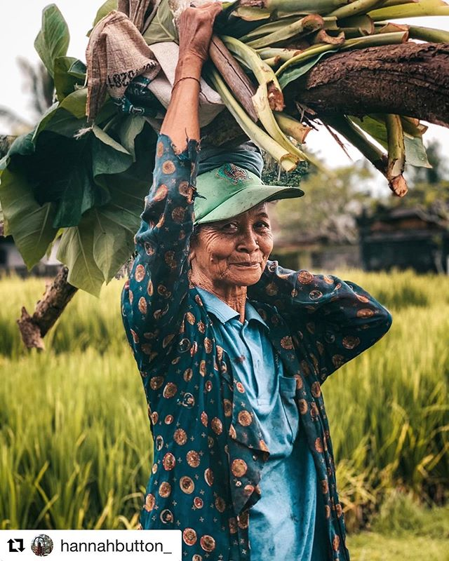 "Wonderful picture from @hannahbutton_ 📷👌 . . . ""A Balinese woman carries a heavy load as she emerges from the rice field behind my homestay in Gadungan Village, Tabanan."" #baliindonesia . . .  #balivillage #balilocal #baliexplore #tabanan #balineseculture #ethicaltravel #communitytourism"