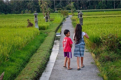 "Repost @robaemery from #sinduvillage 🙏😘 ・・・ ""Had the awesome opportunity to stay with Wayan Sila Wa's family in Sindu Village (just outside of Ubud) through @duaratravels While with the family, we had the privilege of learning how to cook various dishes, going for a walk trough the community rice fields, checking out the local night market, and making daily offerings. Marin even lead her first yoga class for some of the girls in the village. It was definitely the highlight of our time in Bali so far and am so happy we were able to get to know such a generous and welcoming family. Thanks for the hospitality Bhuanawijaya and family! And for the plentiful amounts of Arak and Tuak (aka Palm wine alcohol 😅) ."" . . . . #baliholiday #baliculture #visitubud #balilocal #authenticbali #handycraftbali"