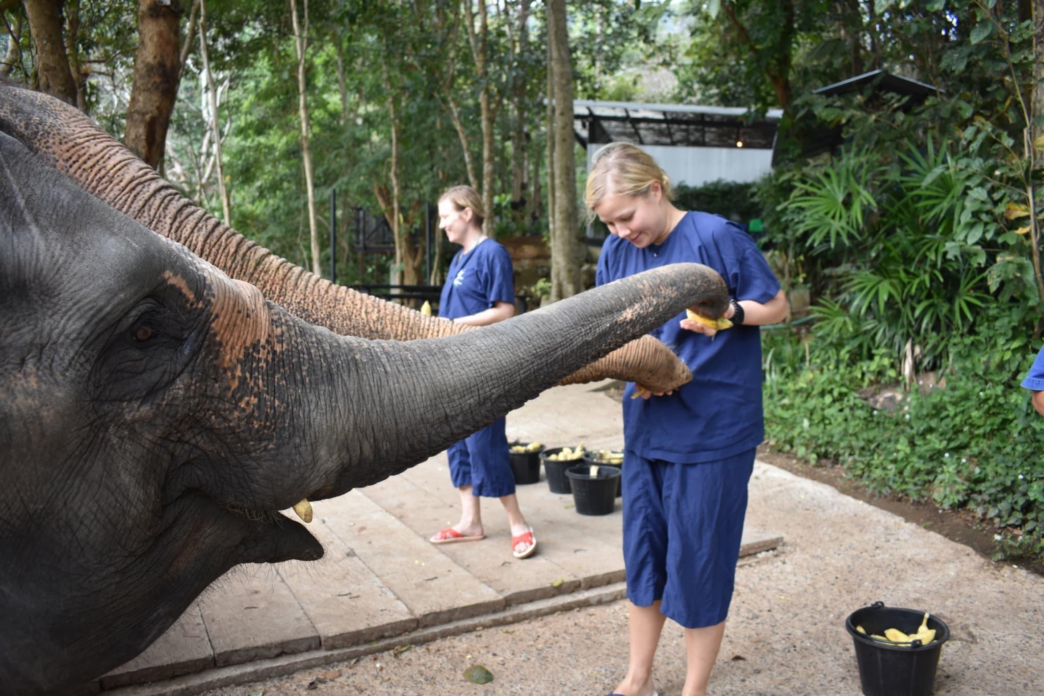 Chiang_mai_ethical_elephant_sanctuary.jpg