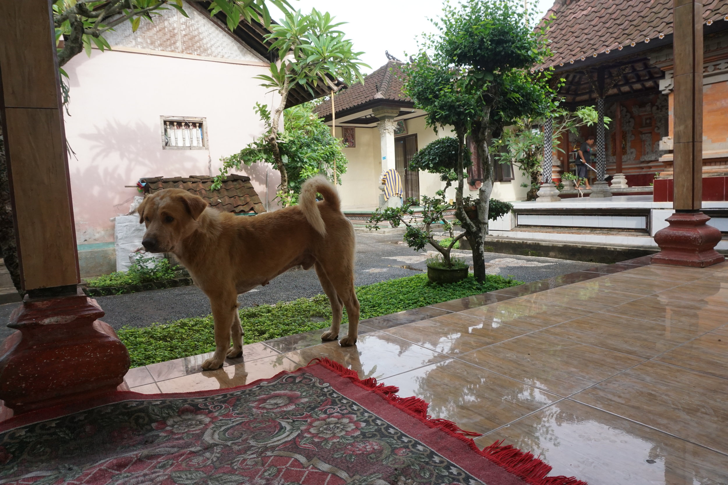 The verandah of the compound where we sat on the evenings. Family dog Putih on the front.