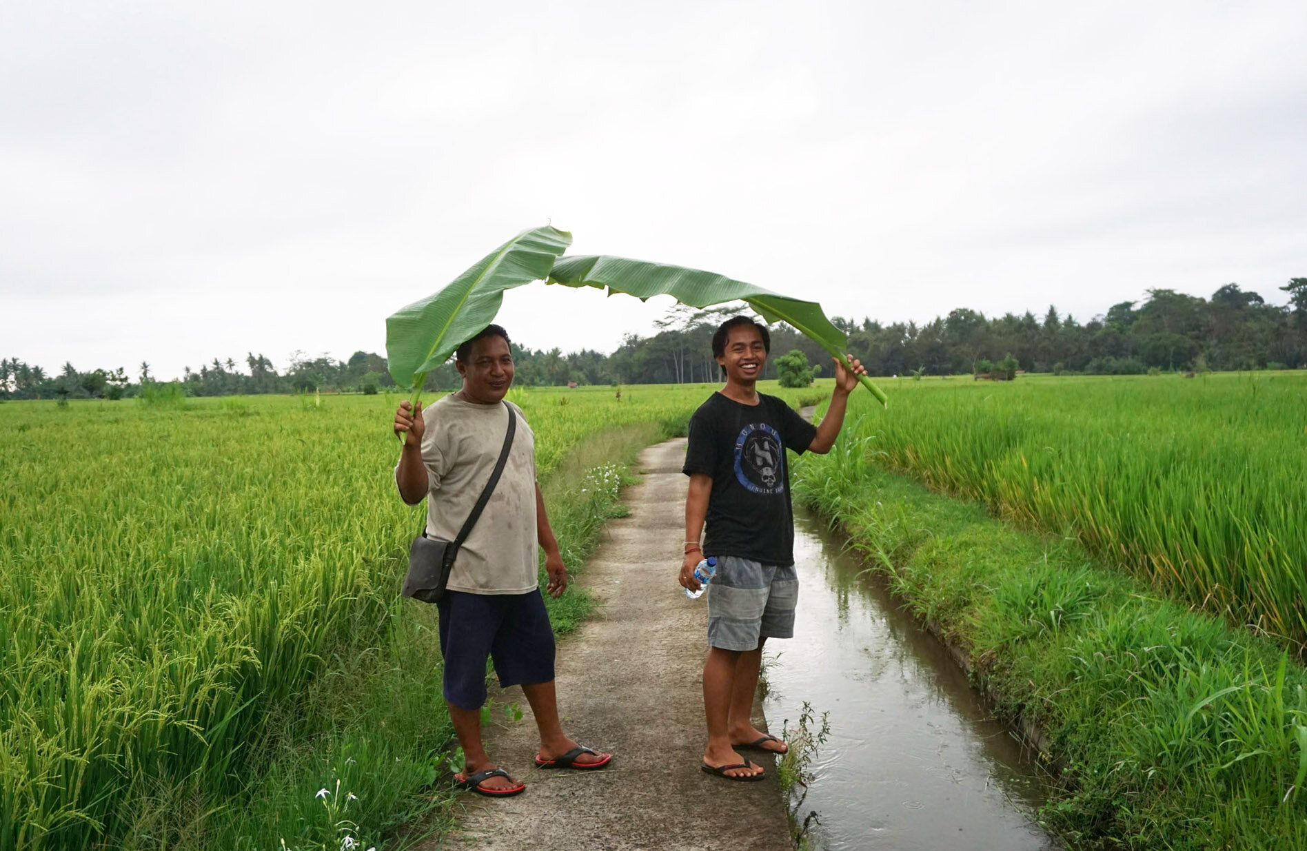 The host Wayan and local contact Bhuana using banana leaves as umbrellas.