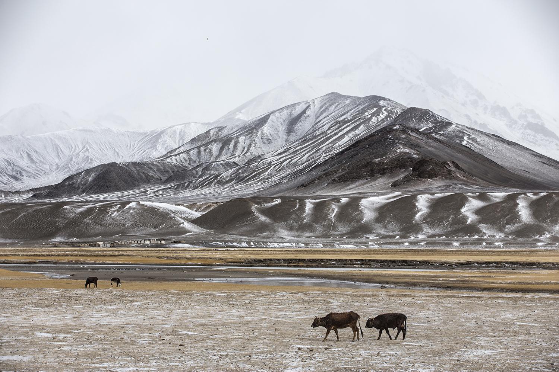 20180419_Tajikistan_Murghab.jpg