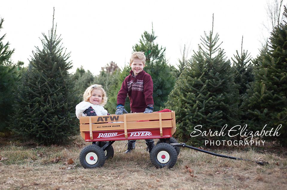 tree_farm_mn_8386w.jpg