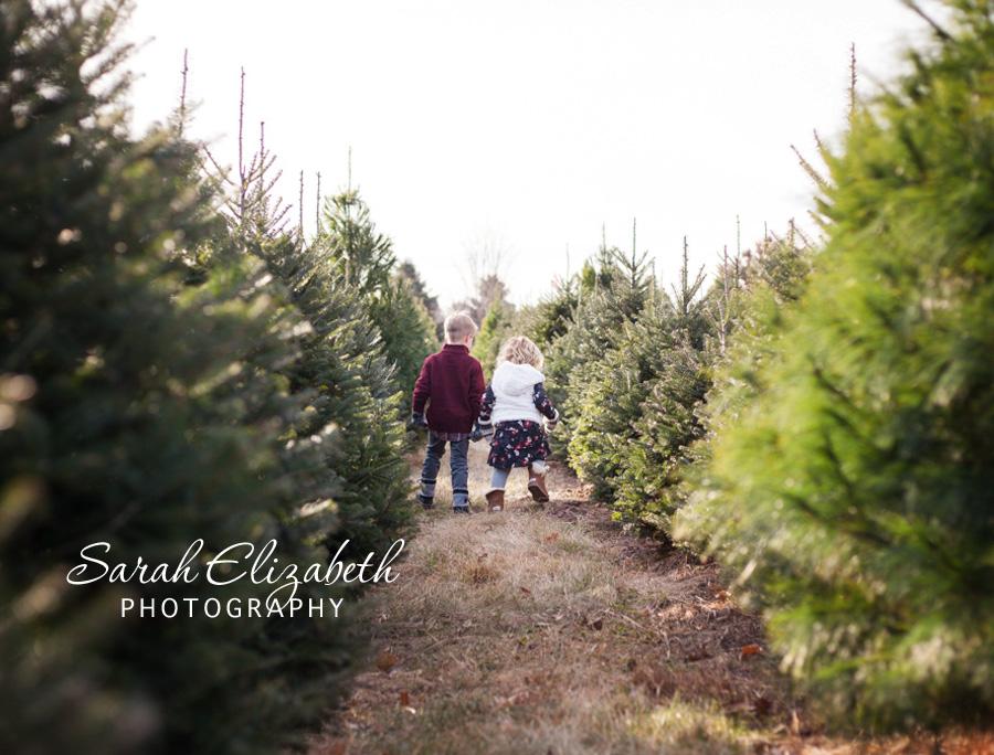 tree_farm_mn_8419w.jpg