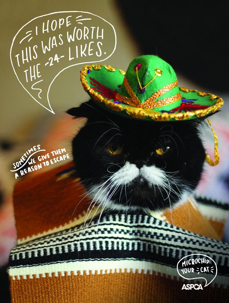 ASPCA_Sombrero_Cat-01.jpg