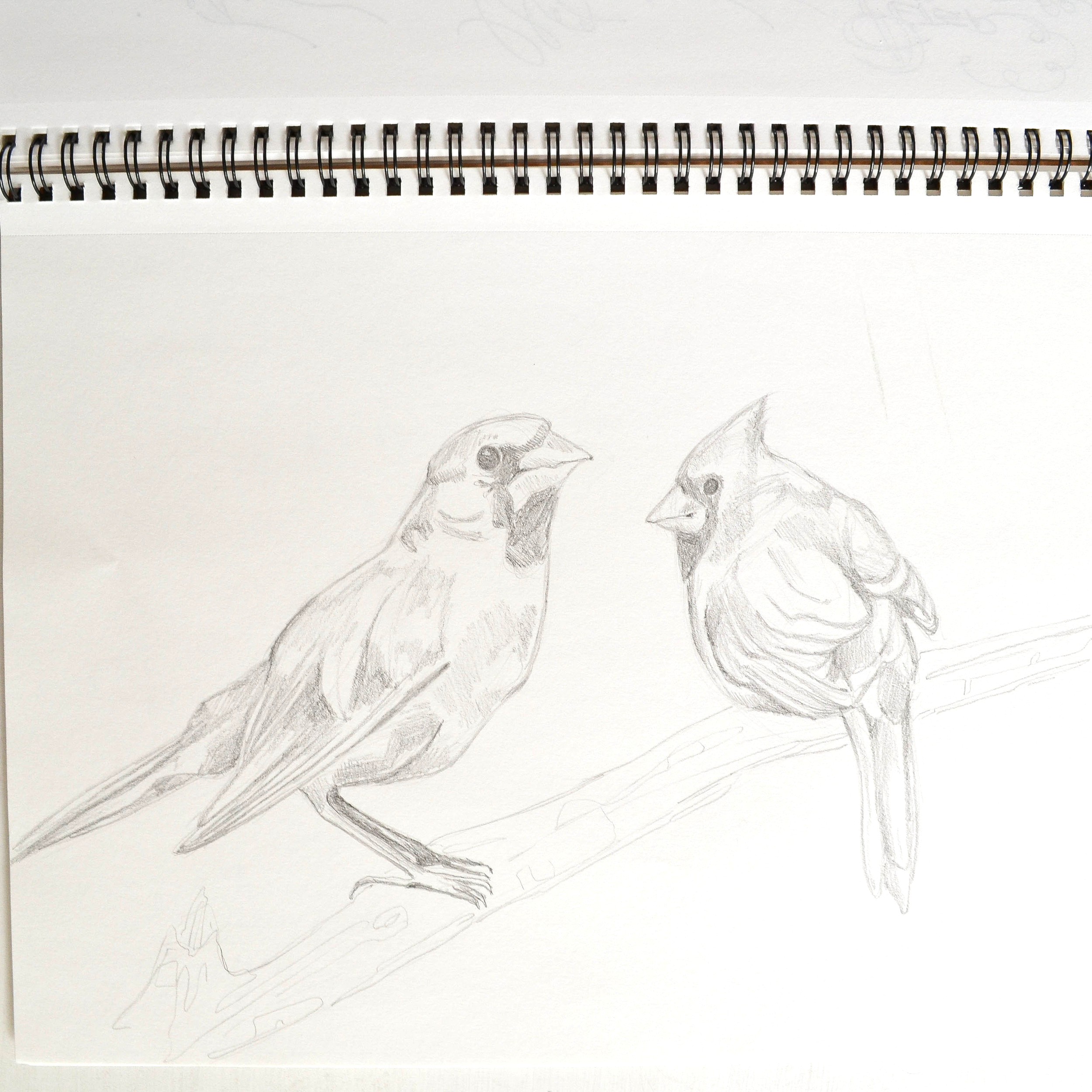 12 | Drawing the sweet cardinals on our back patio. (Card design coming soon!)