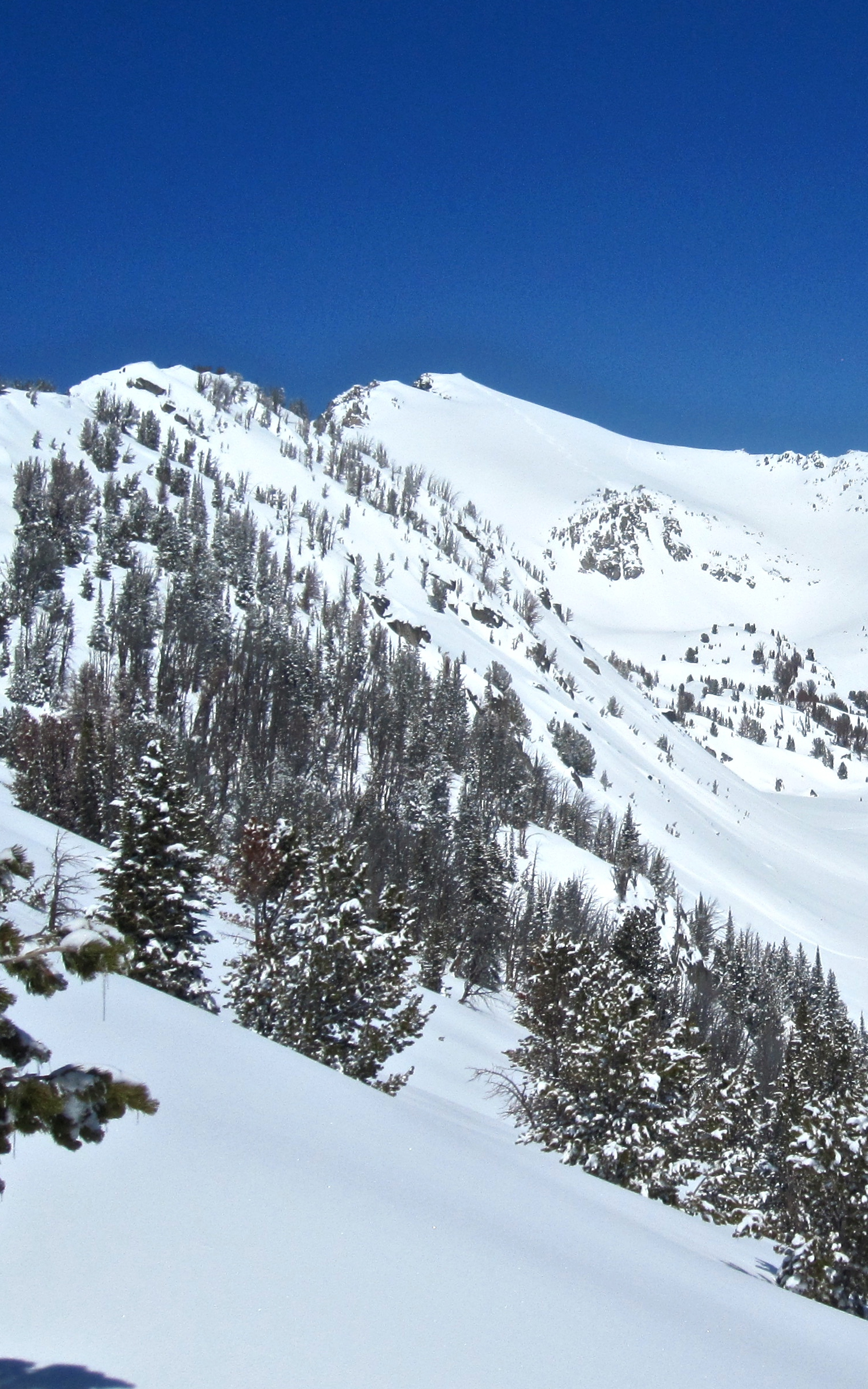 "View of Bear Basin with ""Buttcrack"" chute off in the distance."