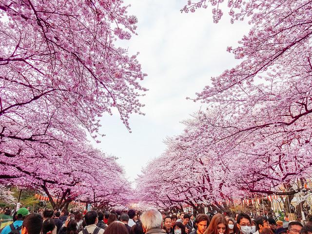 ueno_park.jpg