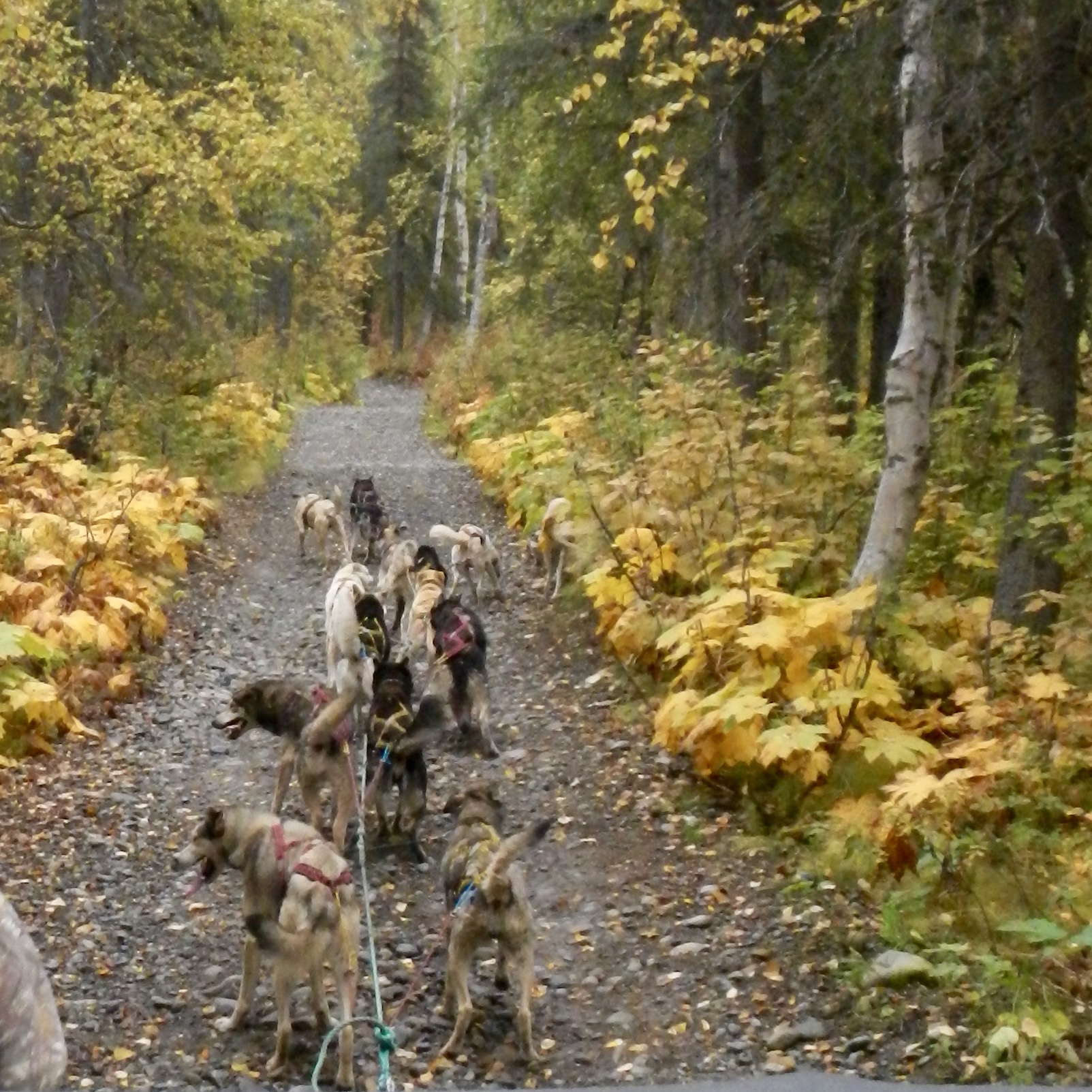 In Sled Dog Racing, the dog out front is called the leader for a reason.