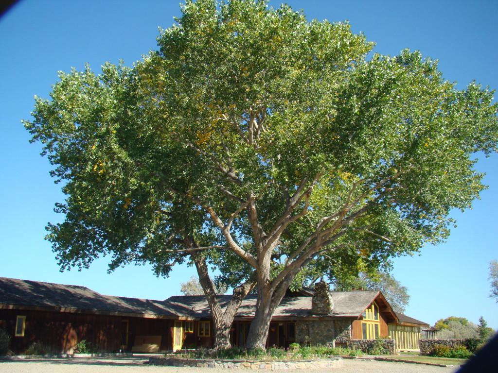 tree_backyard_1.jpg
