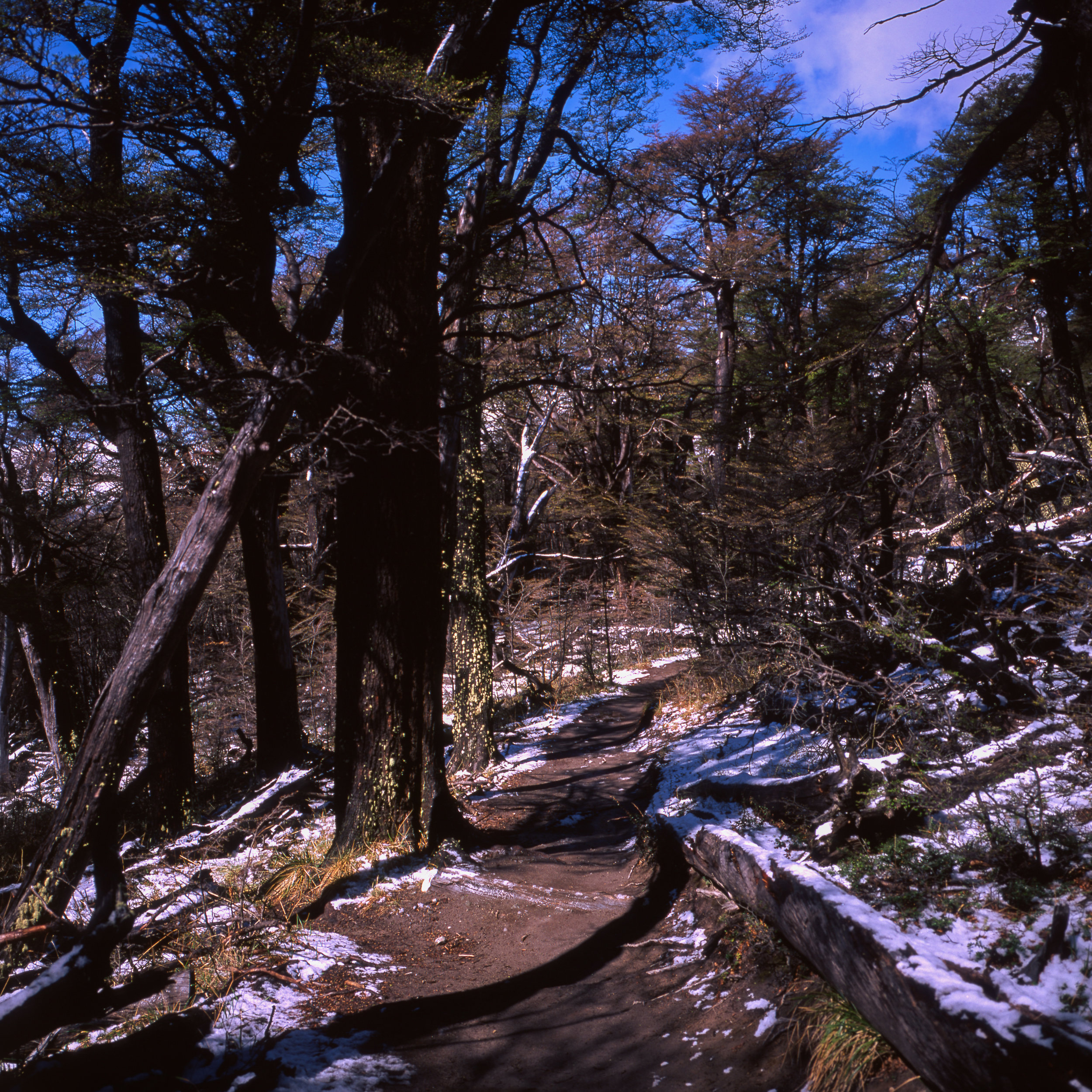 The Trail up to Fitz Roy Fuji GF670w - Fuji Velvia