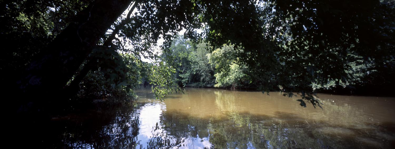 More woods, taken right before Wooten's Landing. P6x14 | Super Angulon | Provia 100f