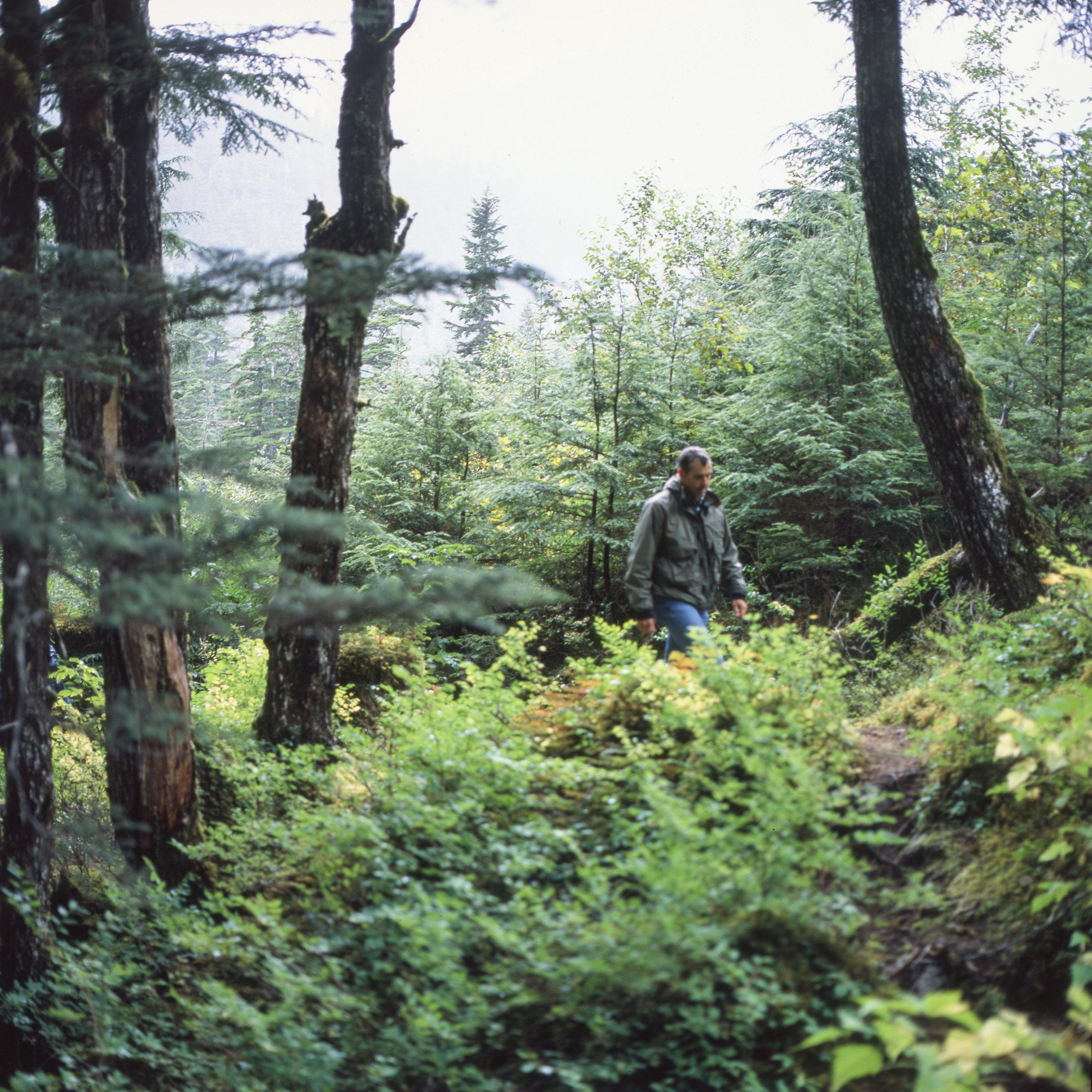 Dad on the hike Hasselblad 501cm   Fuji Provia 100f