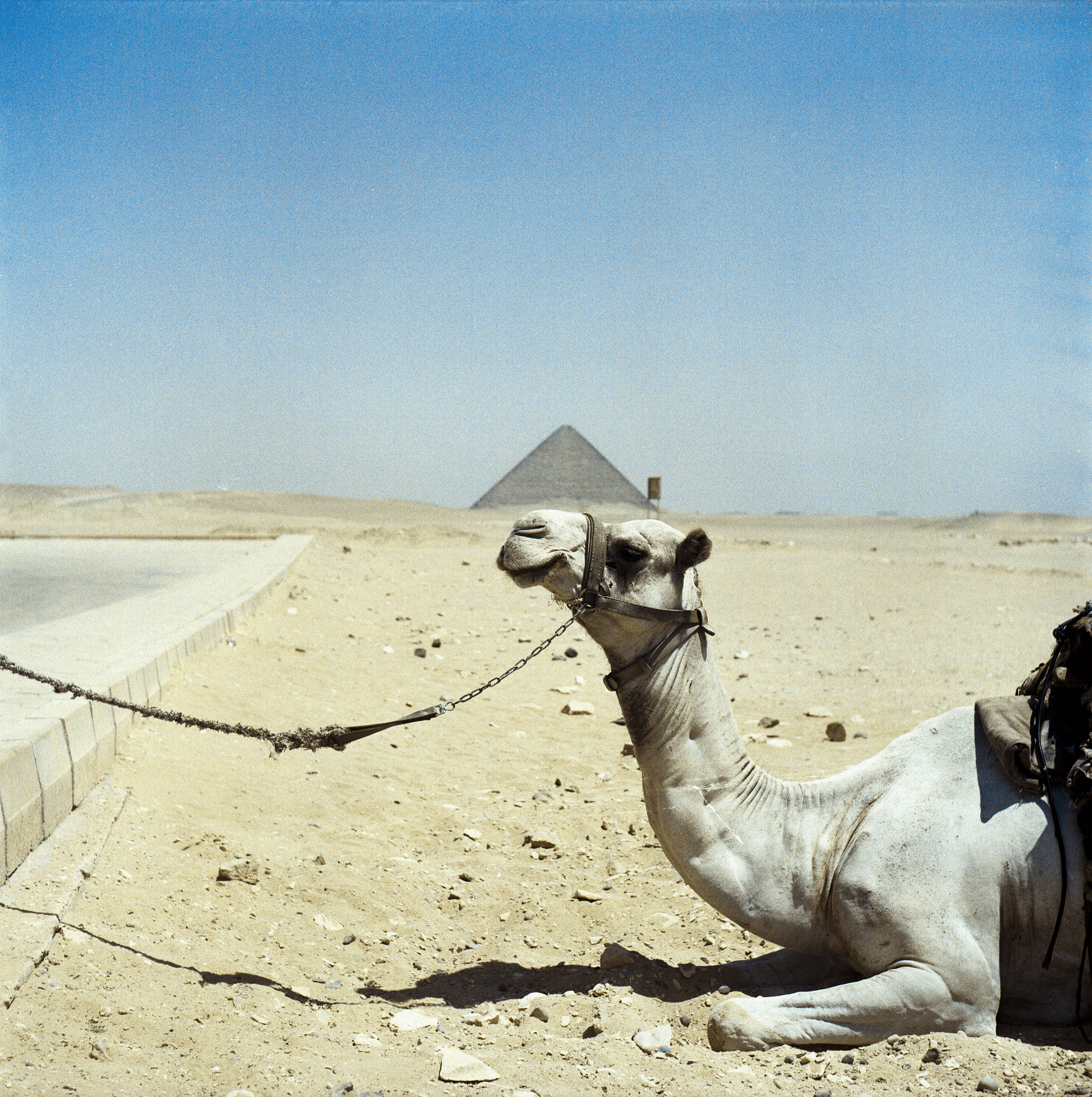 This is one of my favorite photo. Camel and the Bent Pyramid Yashica EM | Fuji Reala 100