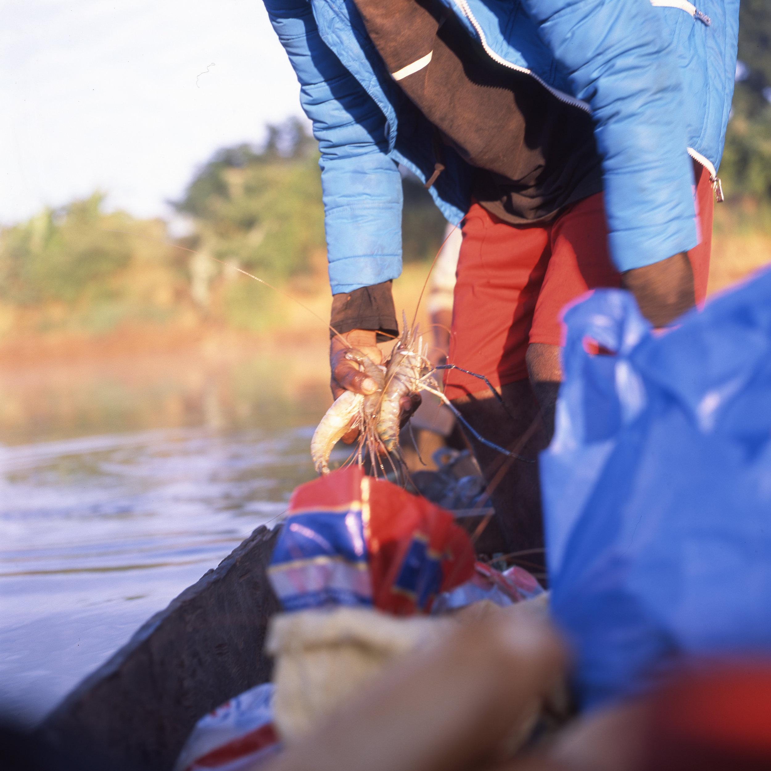 River Prawns Hasselblad 501c | Fuji Provia 100f