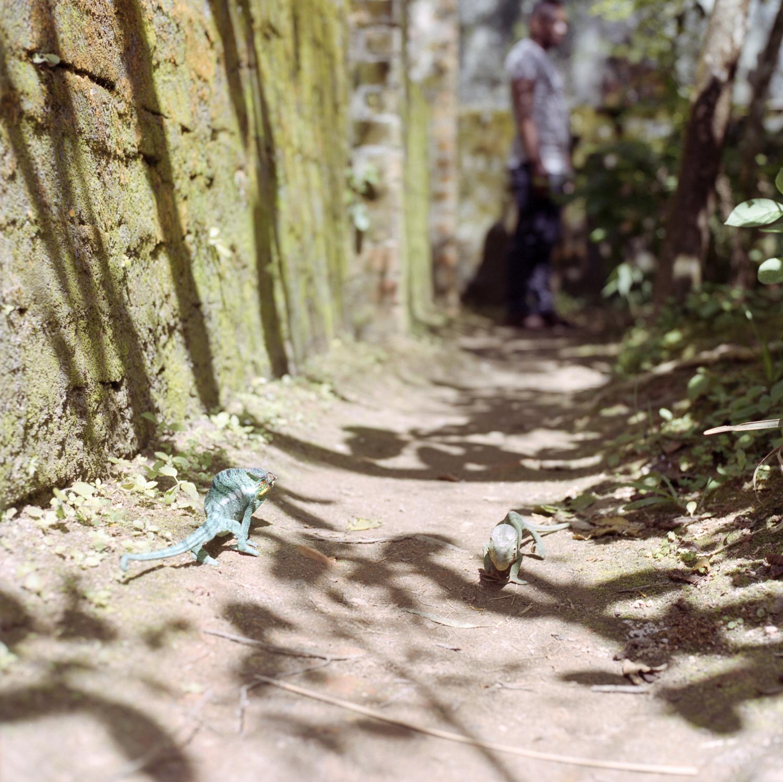 Sisyphus the Chameleon  Hasselblad 501c   Kodak Portra 400