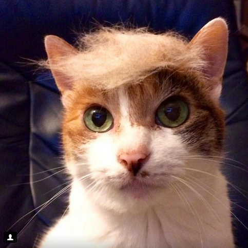 Courtesy of @Trumpyourcat