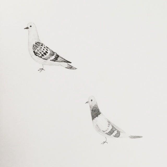 Some pigeons for Saturday night. #sketchbook #illustration #blackandwhite #pencil #birds