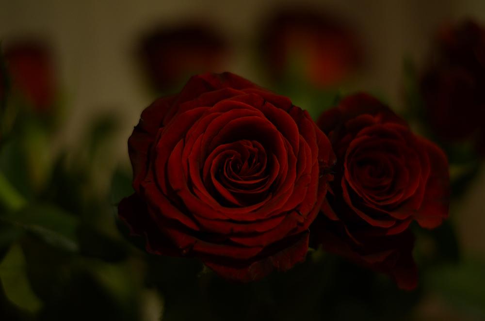 boudoir+fotograf+morgongava+skane+malmo+rose.jpg