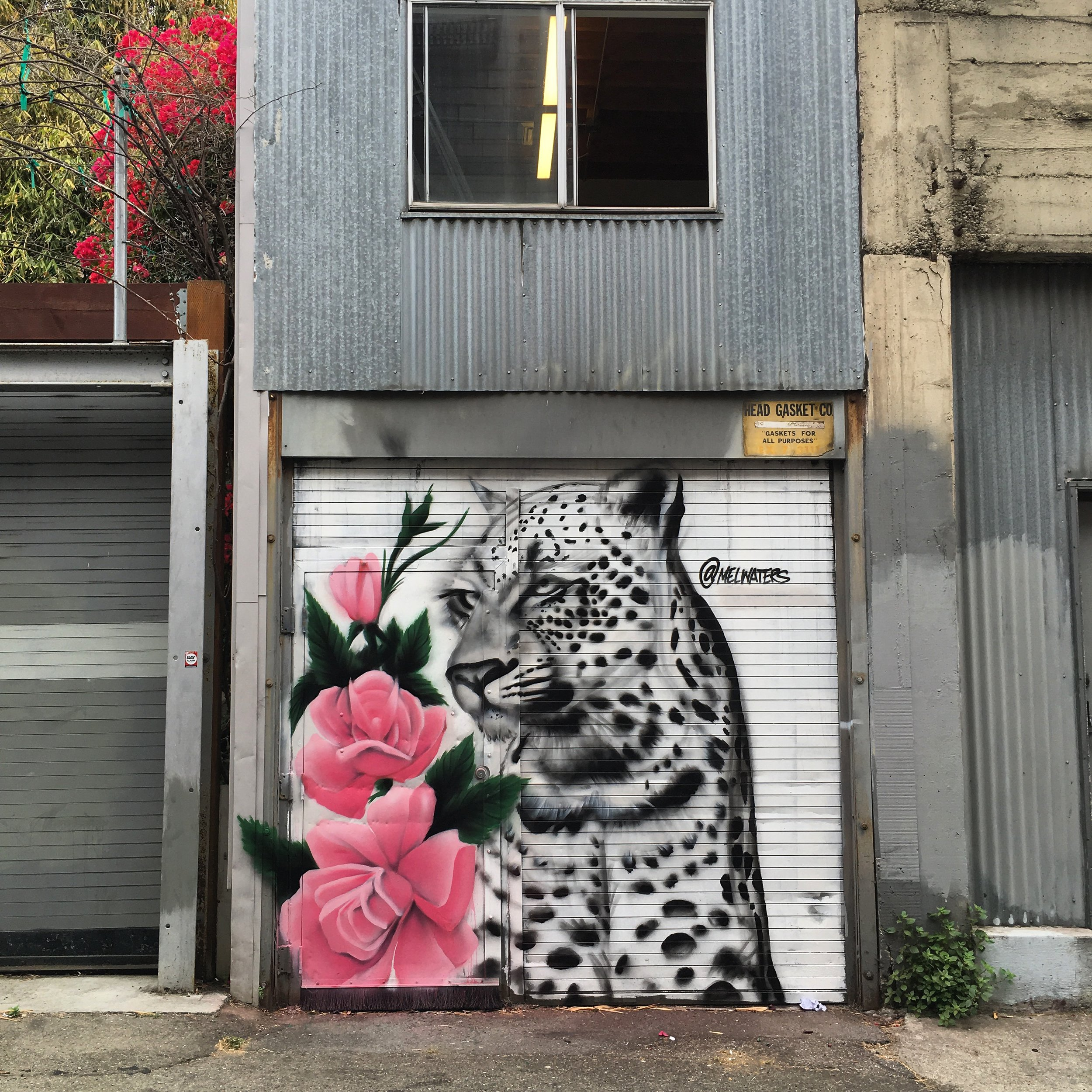 Snow Leopard and Roses