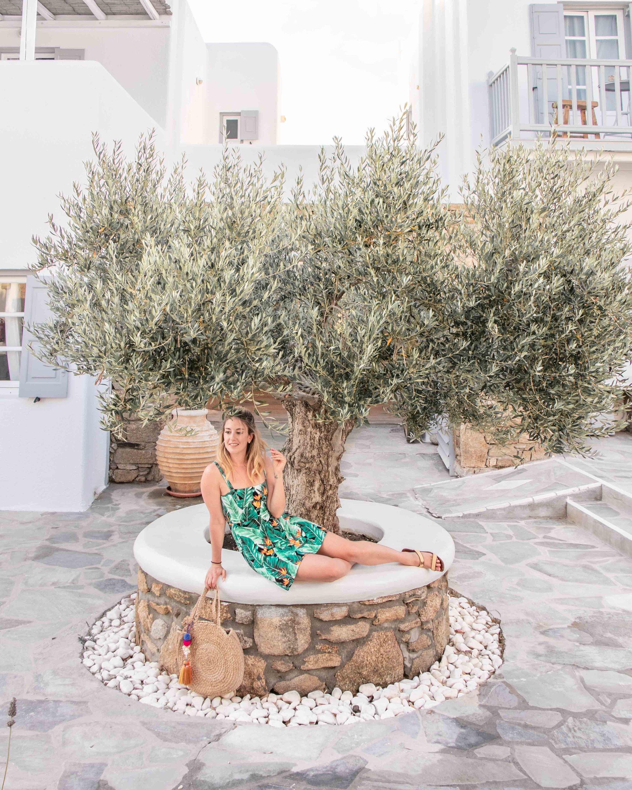 Olive tree at my hotel -  San Giorgio Mykonos