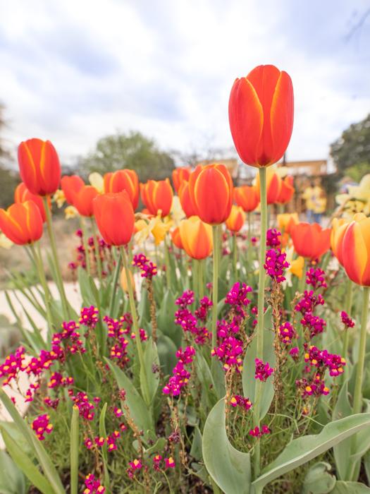 Botanical Gardens-3.jpg