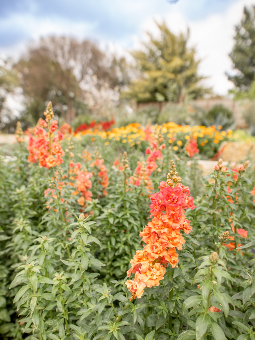 Botanical Gardens-2.jpg