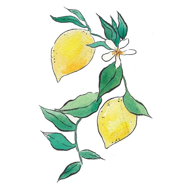 On my desk today: vibrant lemons for summer wedding stationery 😍🍋🌿 • • • #wedding #weddingplanning #events #eventplanner #bridal #partyplanning #eventdesign #ink #penandink #illustrator #illustration #artist #sketchbook #penandink #instaart #artwork #draw #initial #monogram #oranges #artoftheday #prints #onmydesk #artist #etsy #etsyshop #etsyseller #watercolour
