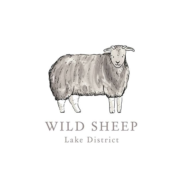 I loved working on this logo design for @wild_sheep!  Wild Sheep is the most lovely Shepherds Hut in a beautiful corner of the Lake District 😍 The design features a Hardwick sheep which are native to Cumbria 🐏 • • • #ink #penandink #illustrator #illustration #artist #sketchbook #penandink #instaart #artwork #draw #artoftheday #prints #onmydesk #artist #etsy #etsyshop #etsyseller #watercolour #sheep #lakedistrict #cumbria #wildsheep #lakedistricttorurism #visitlakedistrict