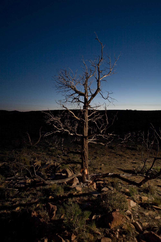 Night Tree #1.jpg