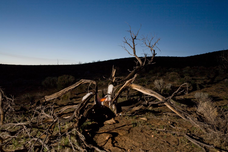 Night Tree #2.jpg