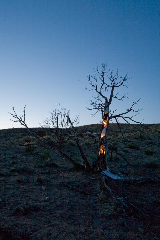 Night Tree #3.1.jpg