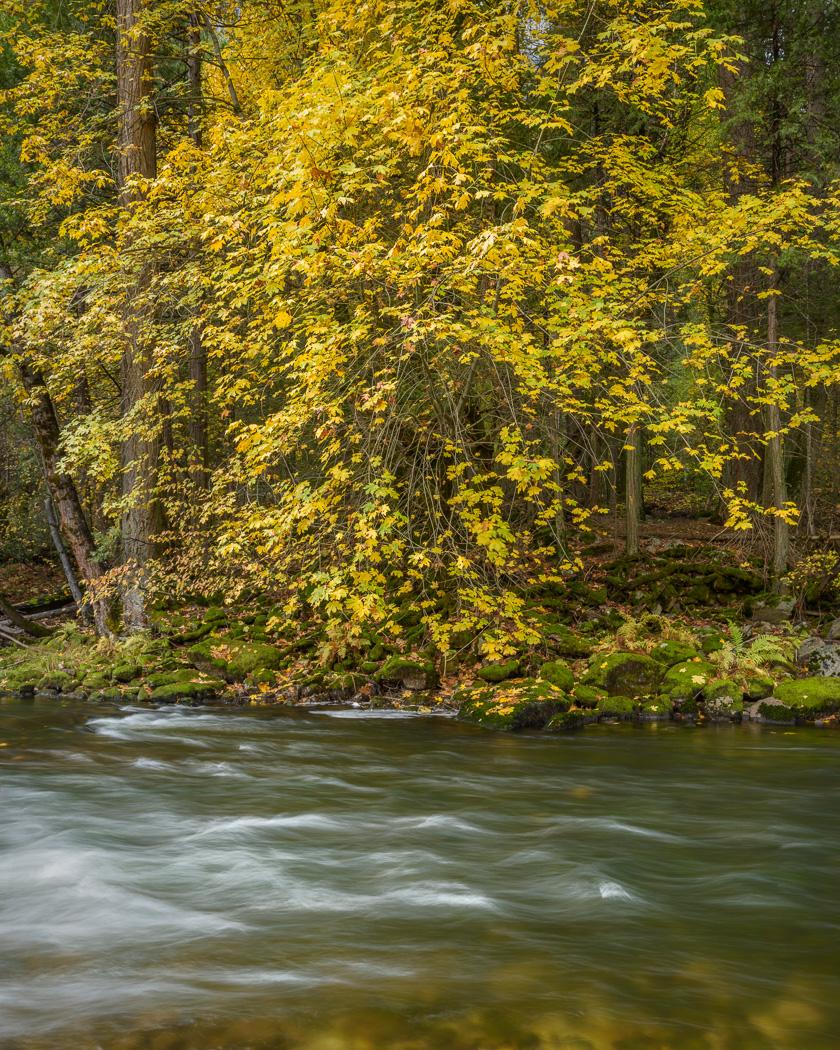Yosemite-Leaves.jpg