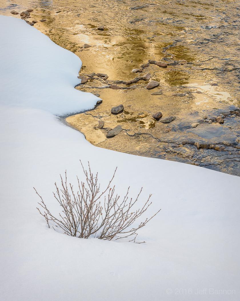 KrimmlevAchental-20March 27, 2016-Golden Bush.jpg