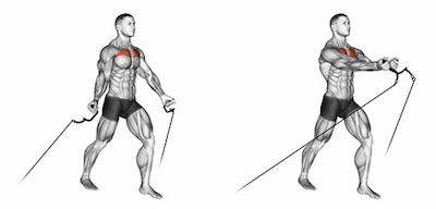 Low Pec Cable Fly