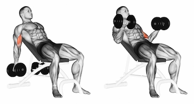 Seated Incline Dumbbell Biceps Curl