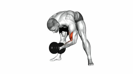 Standing One Arm Biceps Concentration Curls