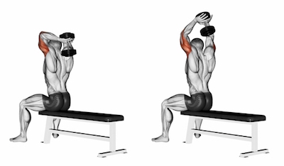 Seated Two Arm Overhead Triceps Extensions