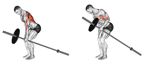 Barbell One-Arm Bent Over Rows