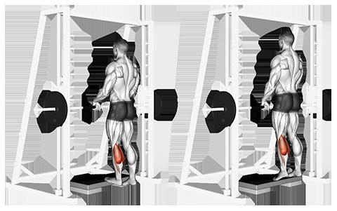 Smith Machine Standing Calf Raises