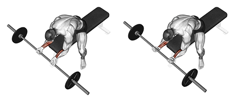 Barbell Bench Palms Up Wrist Curl