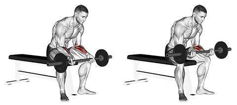 Seated Palms Up Wrist Curl