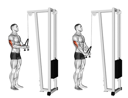 Cable Triceps Rope Pushdowns