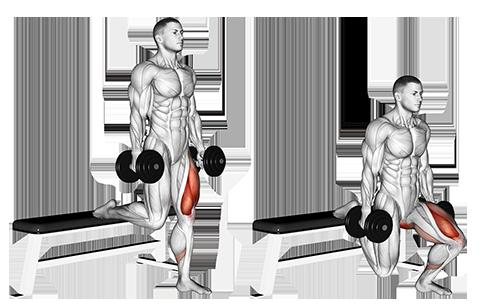 Single Leg Dumbbell Split Squat