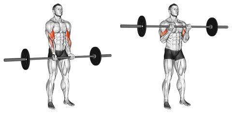 Narrow-Grip Standing Barbell Biceps Curl