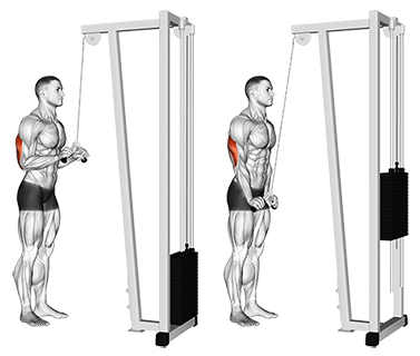 Standing Two Arm Overhead Dumbbell Triceps Extensions