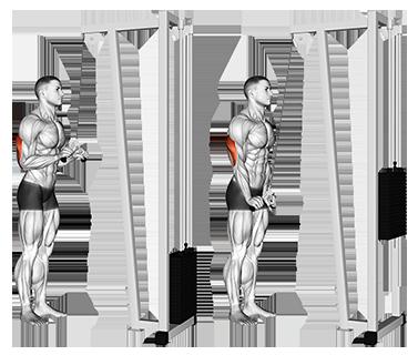 Cable V-Bar Triceps Pushdown