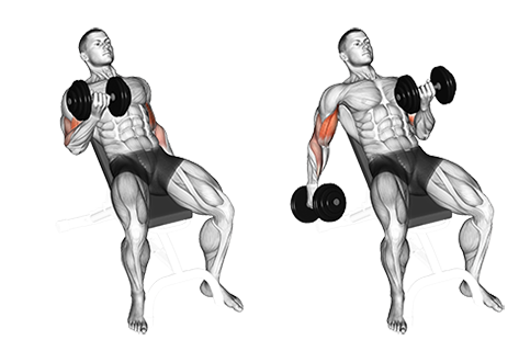 Seated Alternate Incline Dumbbell Biceps Curl