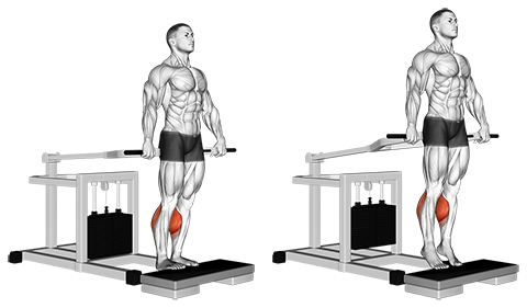 Bench Press Machine Standing Calf Raises